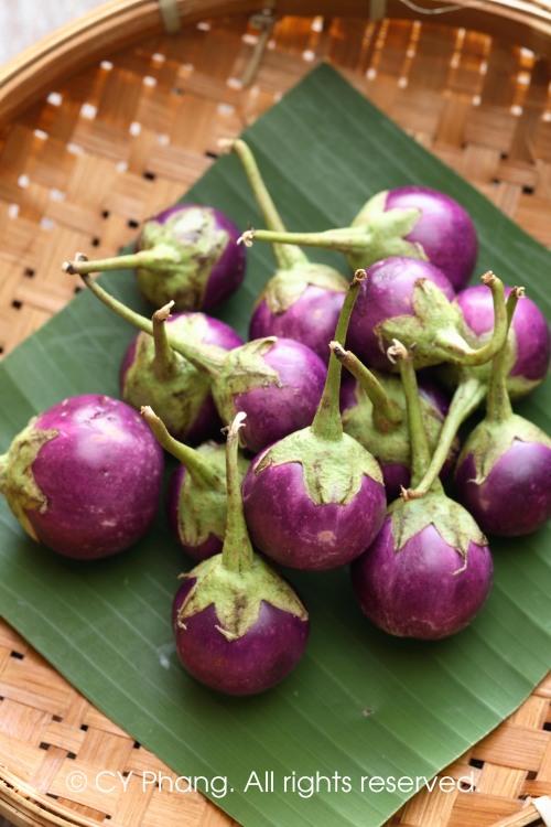 Mini eggplant-IMG_6741-daylight copy